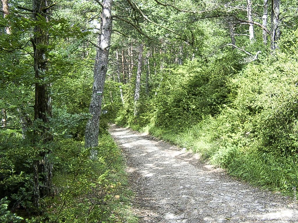 Camminio di Santiago - Roncisvalle - Larrasoana