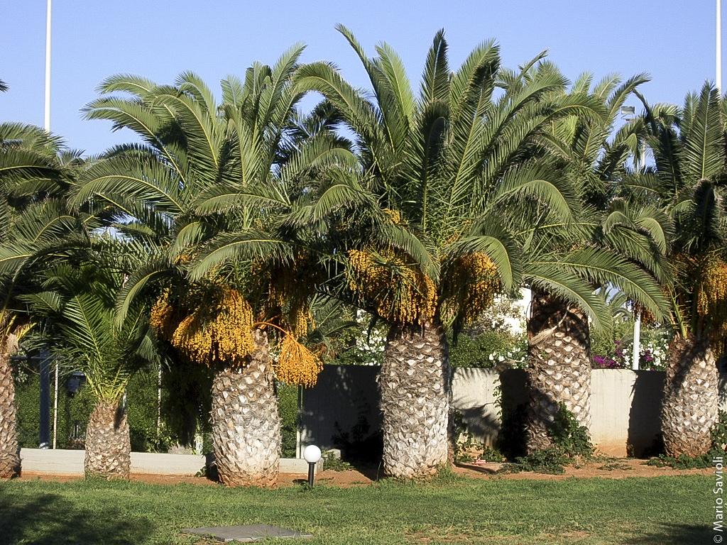 Creta - Le palme