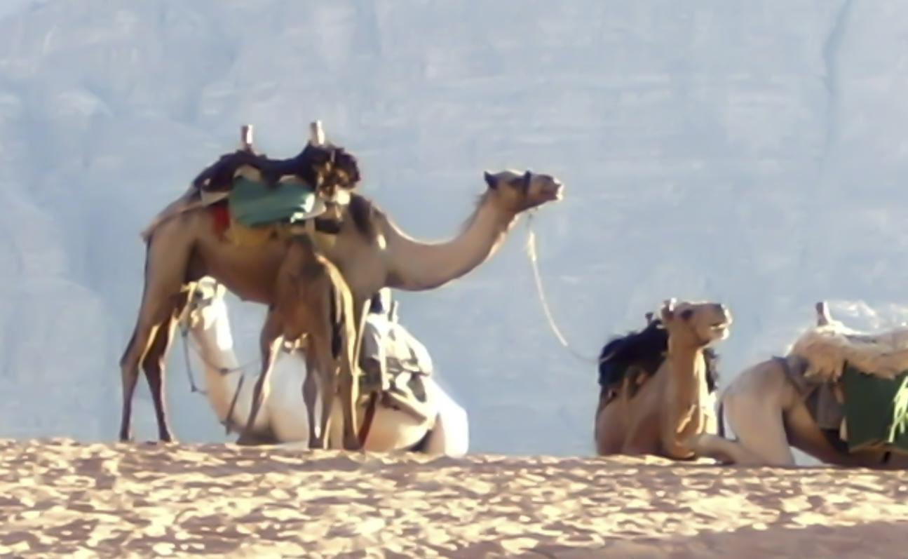 Giordania_Deserto_Carovana_Beduini